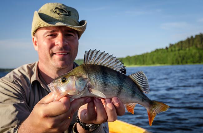 perch-fishing